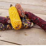 Tabled Corn